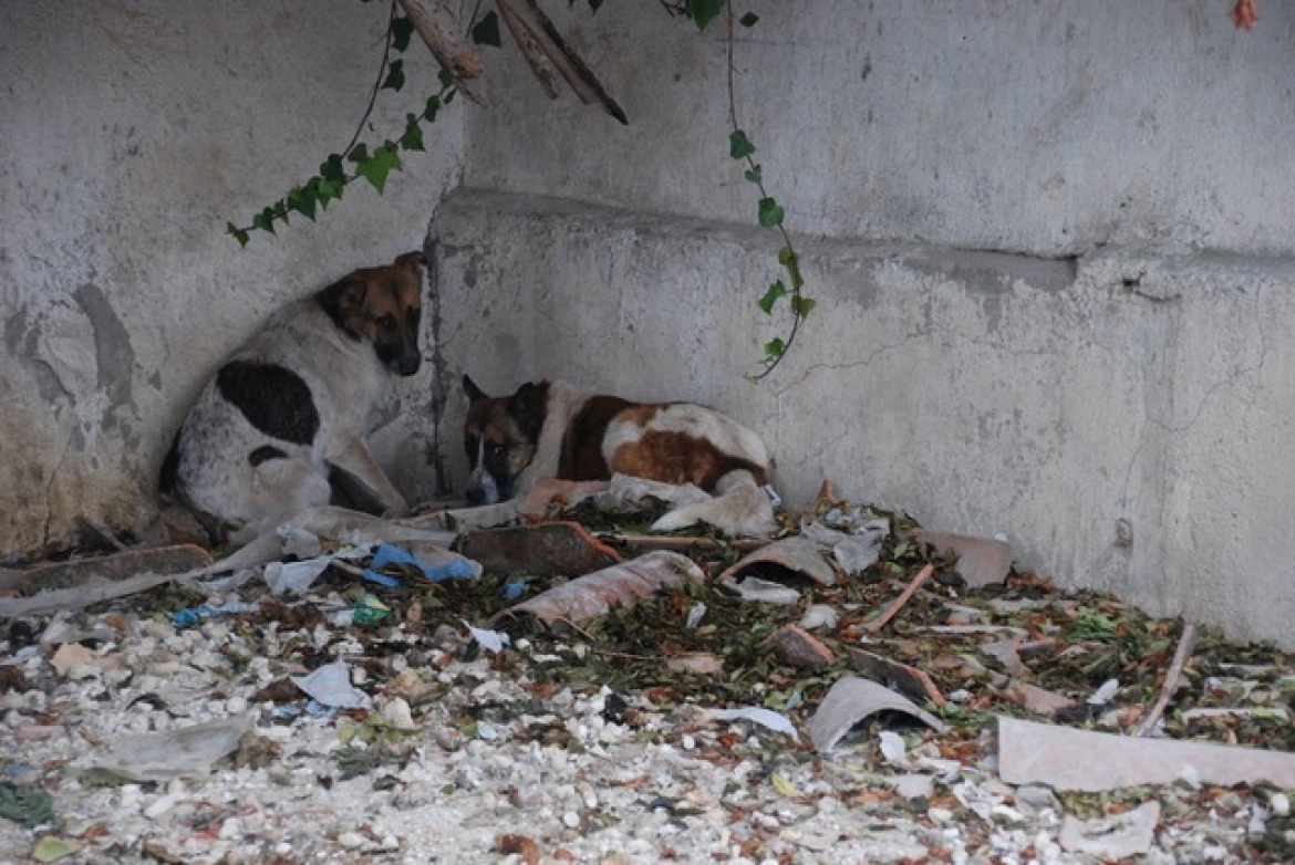 ARE YOU WITNESS OF AN ANIMAL MALTRATE OR ABANDONMENT?